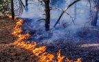 Większość pożarów lasów powodują ludzie