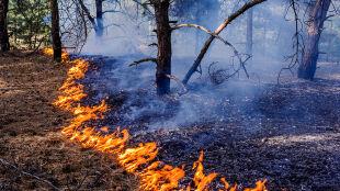 """Ogień zagraża lasom. """"Ściółka suchsza niż papier"""""""