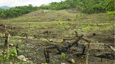 Mniej lasów to mniej deszczu. Fatalne widoki na przyszłość