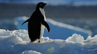 W Antarktyce powstanie największy chroniony obszar na Ziemi